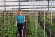 В заботливых руках овощевода Марины Кустышевой огурцы растут и на Крайнем Севере