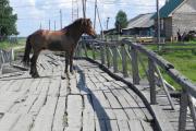 Конь в Ёрмице пропускает через мост только пешеходов