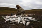 Оленеводам будет разрешено ловить рыбу на территории региональных особо охраняемых природных территориях / Фото Веры Костамо