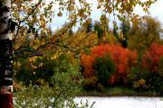 Осень / Фото Елены Бобровой