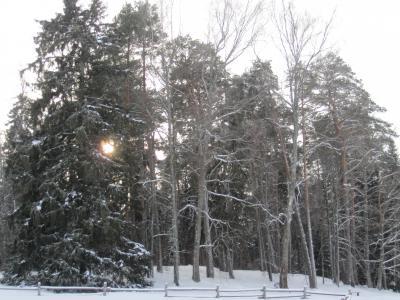 Михайловское прекрасно в любое время года