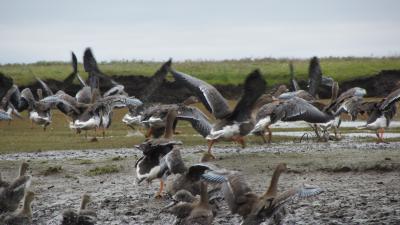 Прибрежная зона – раздолье для птиц