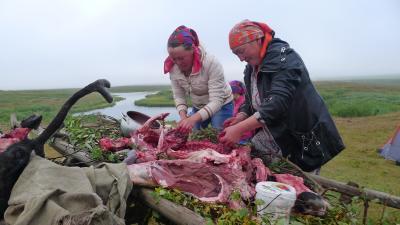 Чумработницы готовятся ко Дню оленя, Канин, 2015 г.
