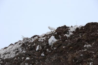Участники круглого стола сошлись на мысли о том, что хрупкую природу Арктики и животный мир надо беречь. Свои предложения они представили в научных докладах / Фото Екатерины Шутяк