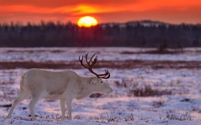 И восходит солнце. Прощай, месяц Большой темноты / Фото Юрия Дриги